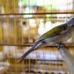 Pássaros_06032018 (4)