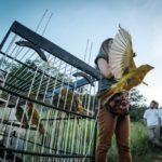 Pássaros_07032018 (8)