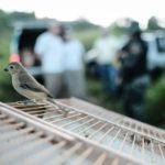 Pássaros_07032018 (9)